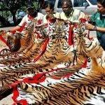 article-writing-save-tigers-shirt_1.jpeg