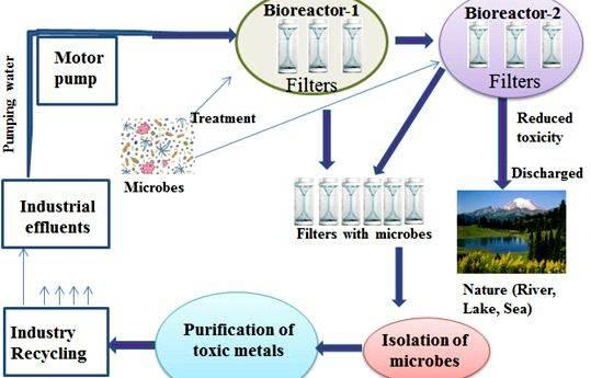 Bioremediation of heavy metals thesis