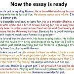 english-essay-writing-my-pet_2.jpg