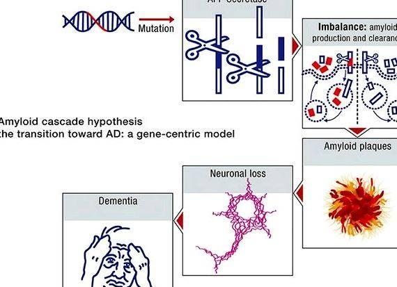 Amyloid cascade hypothesis summary writing The outcomes of transgenic experiments