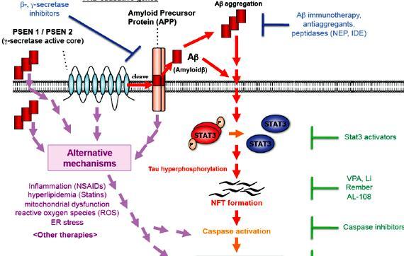 Amyloid cascade hypothesis summary writing including its origin
