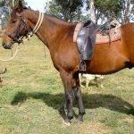 article-writing-jobs-australia-horses_3.jpg