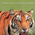 article-writing-on-save-tigers-posters_1.jpg