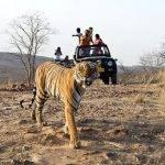 article-writing-on-save-wildlife-t-shirts_1.jpeg