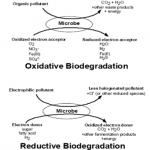 biodegradation-of-crude-oil-thesis-proposal_1.png