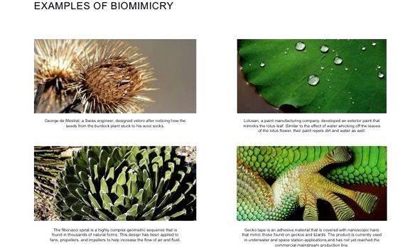 Biomimicry in architecture thesis proposal PDF College of Oklahoma Biomimetic