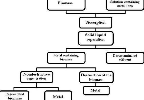 bioremediation for big materials thesis