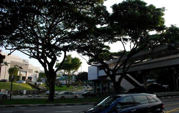 Dissertation help service singapore