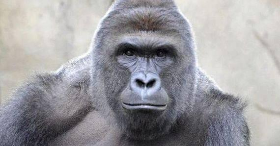 Is writing with your left hand harambe expect results in just