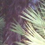 myakka-skunk-ape-letter-writing_3.jpg