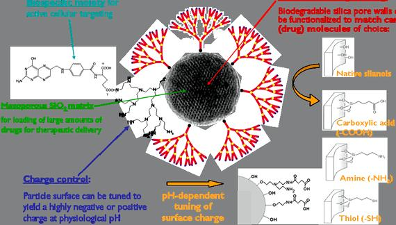 Nanoparticles drug delivery thesis writing from extracellular to endolysosomal