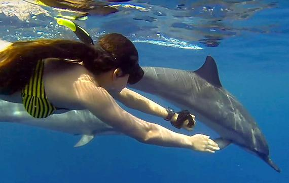 Online article writing spinner dolphins by weight -- from 135