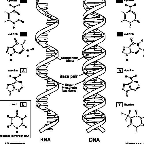 Rna world hypothesis and supporting evidence in writing of ribozymes -- and soon