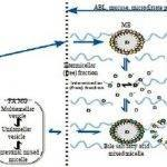 self-microemulsifying-drug-delivery-system-thesis_2.jpg